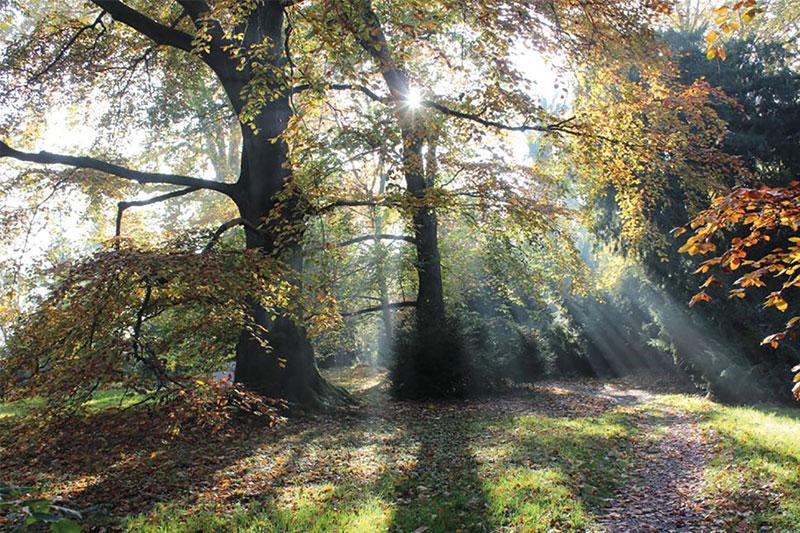 Waldbaden - Lebenskraft stärken am Niederrhein