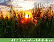 Motiv 1: Sonnenaufgang in der Feldwiese